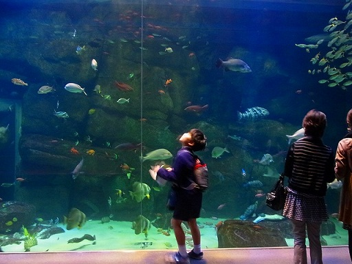 26宮島水族館