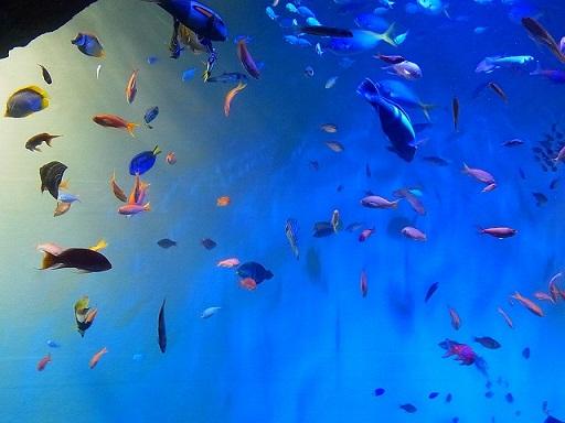 27宮島水族館