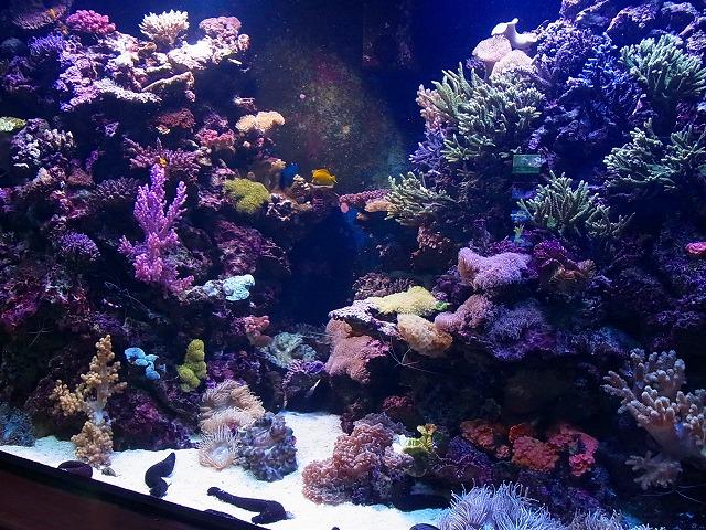 30宮島水族館