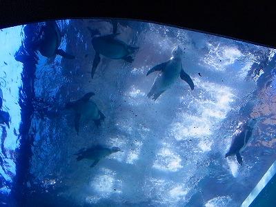 33宮島水族館