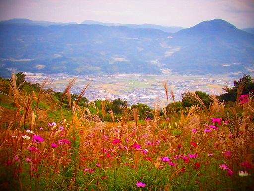 33きり株山