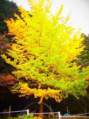 4金砂湖の紅葉