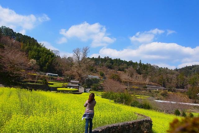 18徳島 大久保の菜の花