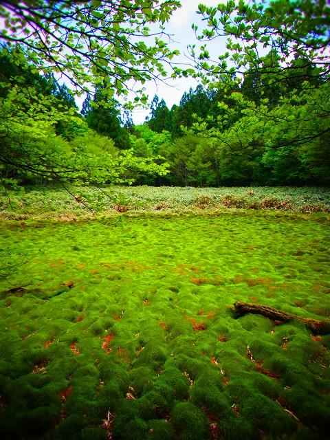 30笹倉湿原 神の庭