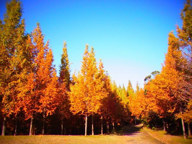 太古の森1