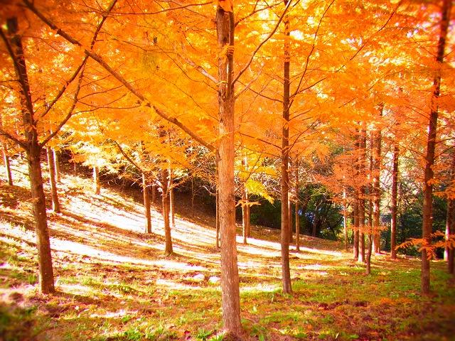 太古の森3