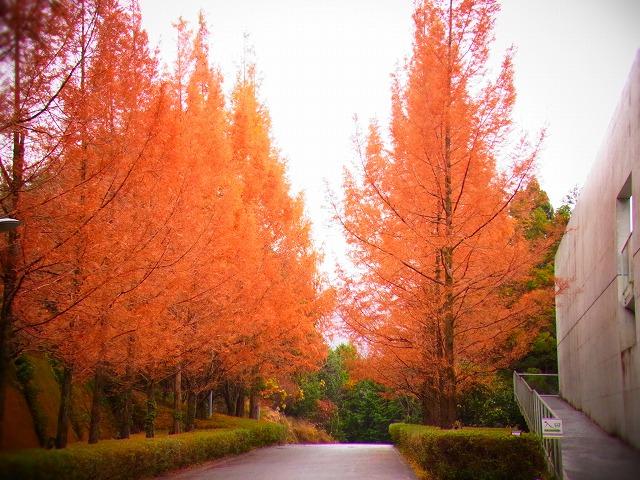 横倉山自然の森博物館2