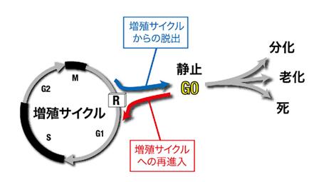 fig01.jpg