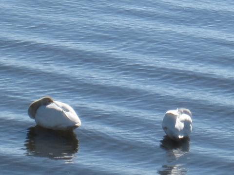 猪苗代湖4_convert_20110216202128