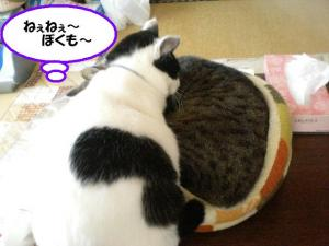 ねぇぼくモカ