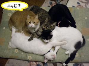 猫団子③ニャに?