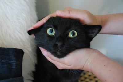 甘えんぼ猫