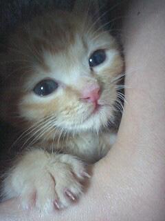 美猫の兆し
