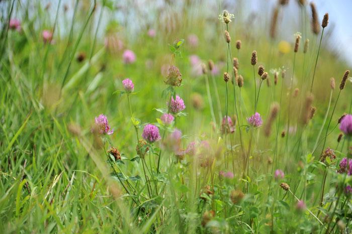 基地の周りの草花