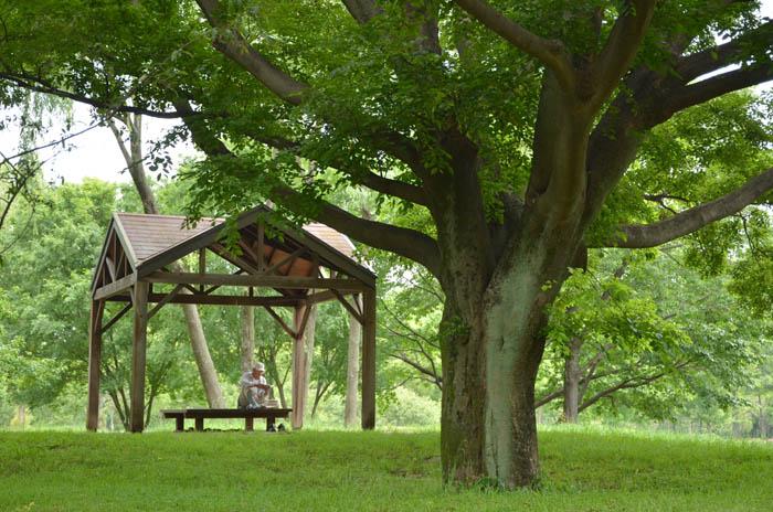 彩の森公園ベンチ