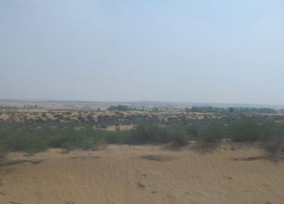 車窓風景 沙漠と緑の木立