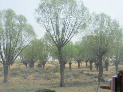 沙漠にも緑の木立