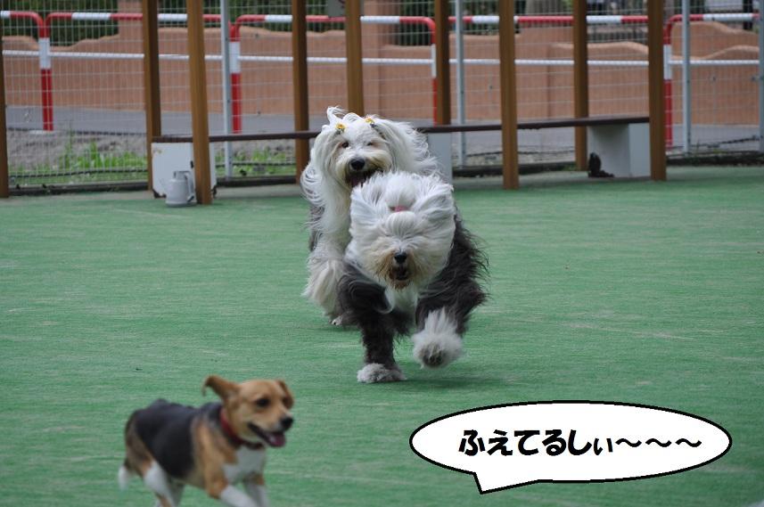あられ Bajiru ビーグル