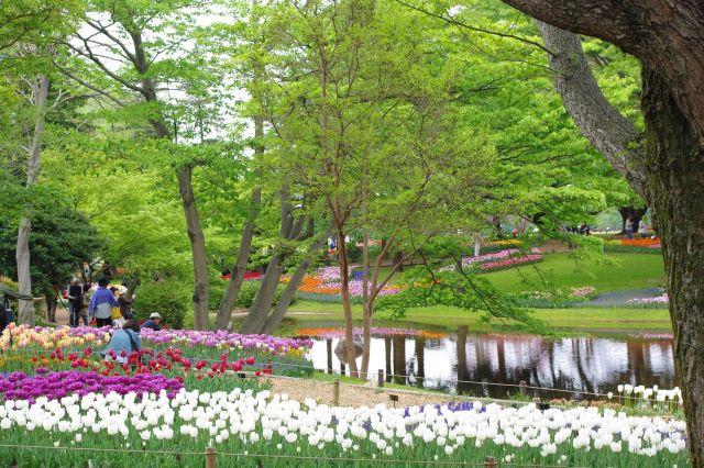 昭和記念公園 331