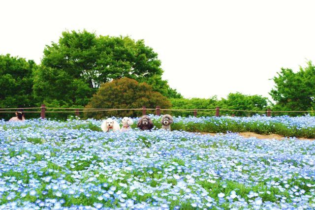 昭和記念公園 320