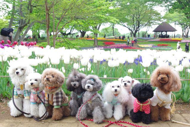 昭和記念公園 394