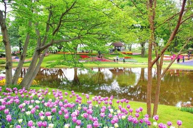 昭和記念公園 341