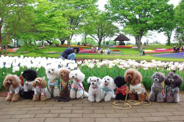 昭和記念公園 462