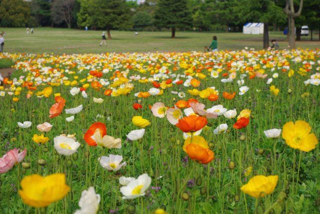 昭和記念公園 622