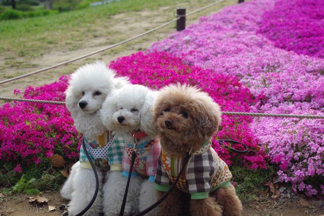 昭和記念公園 617