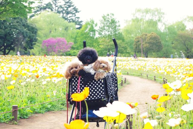 昭和記念公園 834