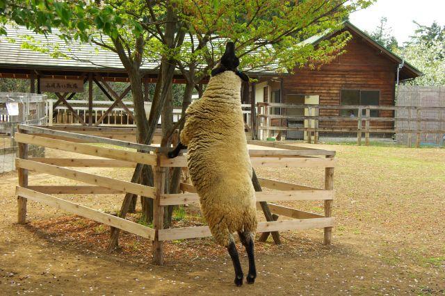 羊山公園 581