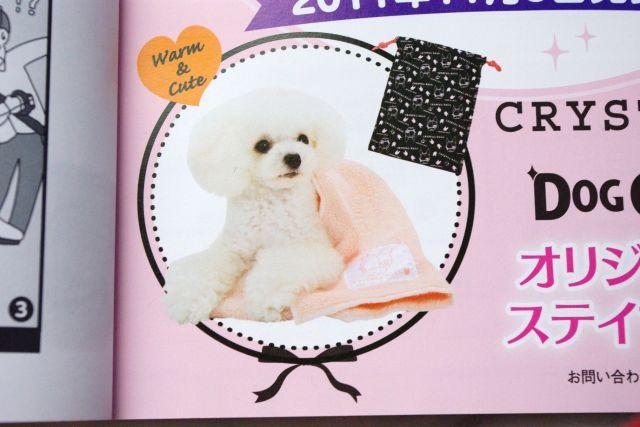 dog doods shop広告 016