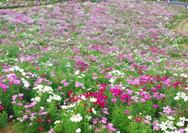 昭和記念公園 210