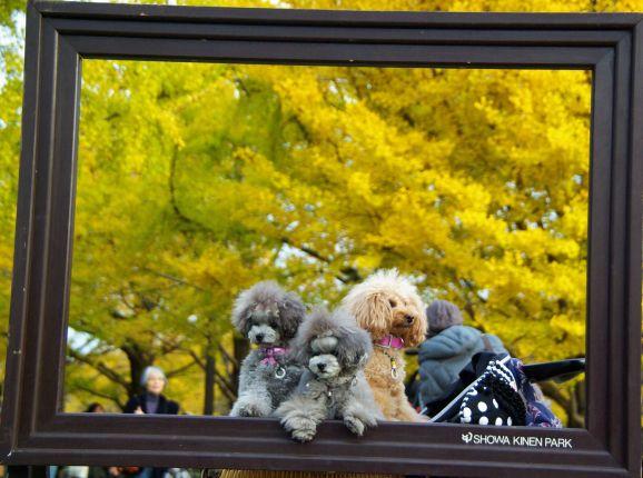 紅葉・昭和記念公園 1152