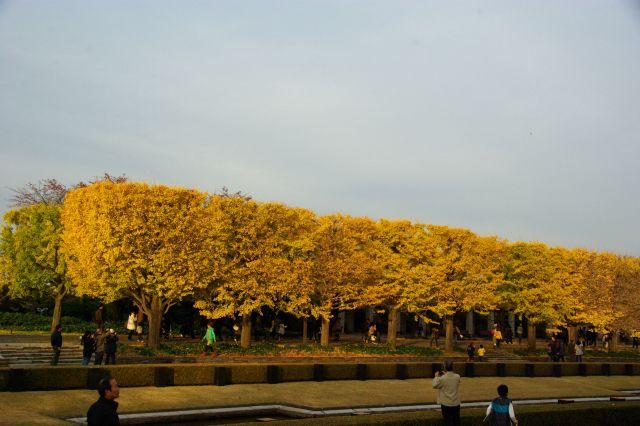 紅葉・昭和記念公園 898