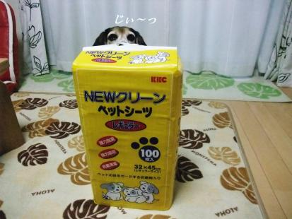 コピー ~ DSCF1066
