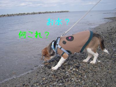 ai-0224-sanpo01.jpg