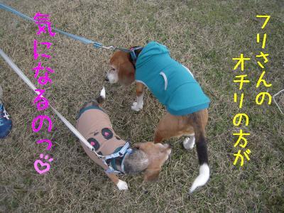 freeai-0224-sanpo01.jpg