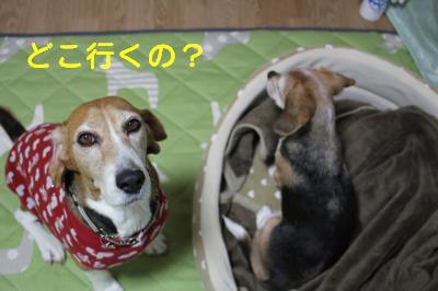 freeai-0227-oheya01.jpg