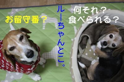freeai-0227-oheya02.jpg