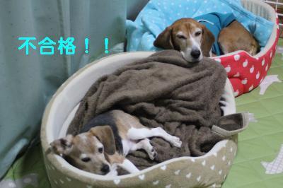 freeai-0301-oheya02.jpg