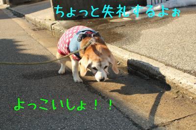 rookie-0216-sanpo01.jpg