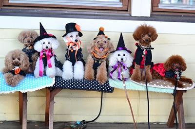 Halloweendog1.jpg