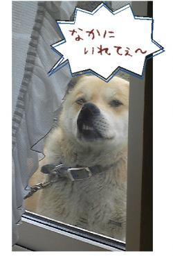 繧峨▲縺阪・縺カ縺・convert_20110303213918