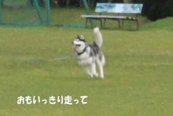 20100620_8.jpg
