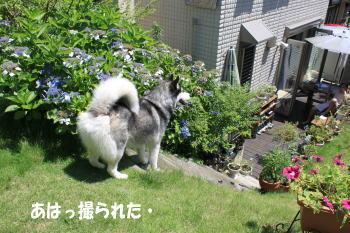 20100711_6.jpg