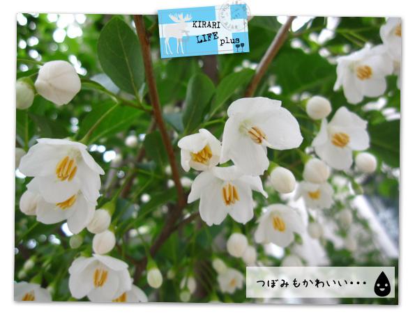 シンボルツリー3