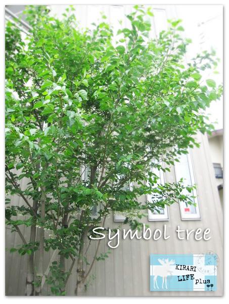 シンボツツリー