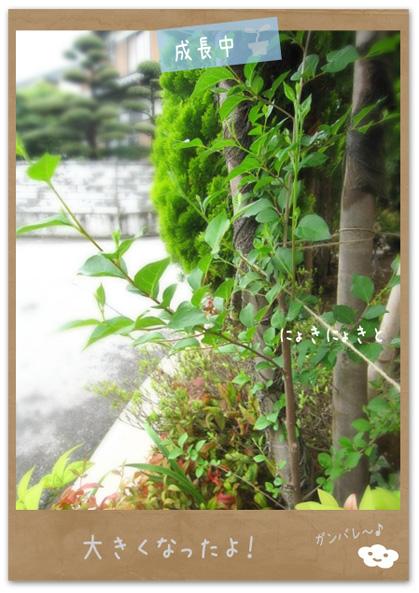 シンボルツリー2