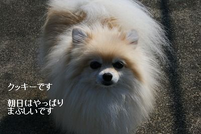 s-IMG_0581.jpg